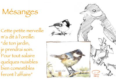 biographisme-animalier-aquarelle-dessin-013