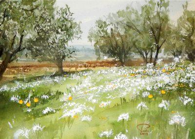 La drôme provençale au printemps