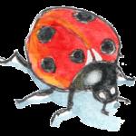 logo du site de biographisme