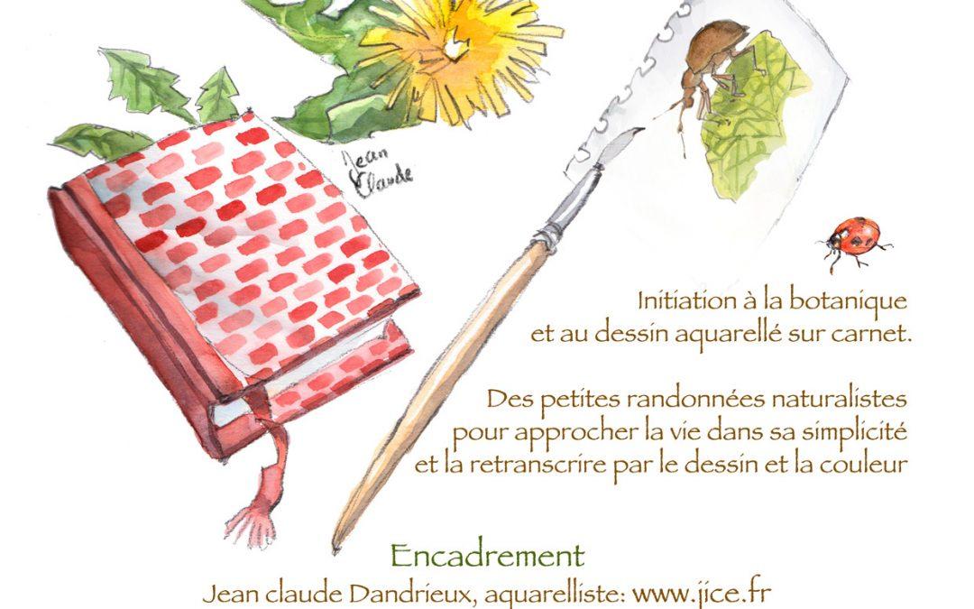 Séjour botanique et dessin aquarelle